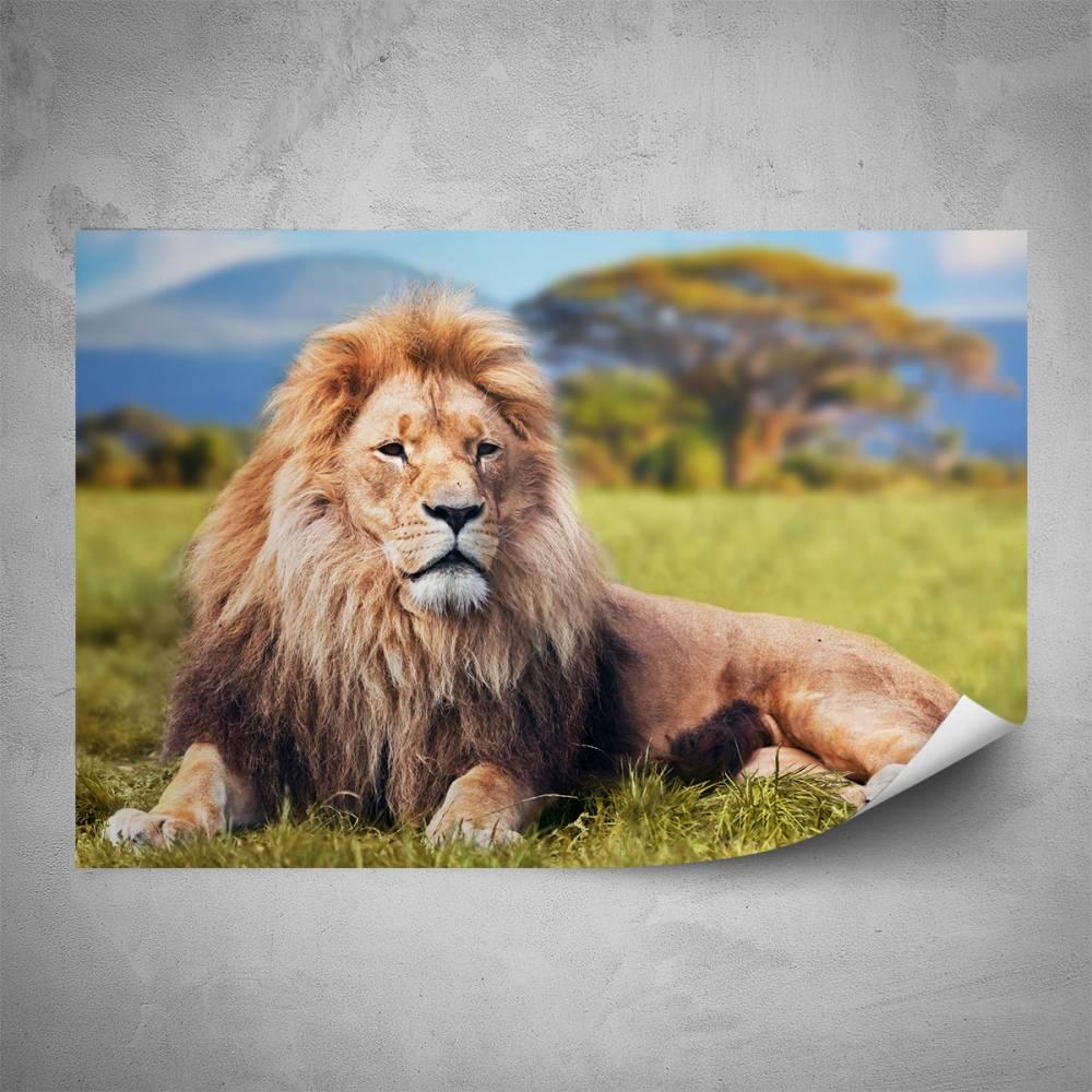Plakát - Král zvířat (60x40 cm)