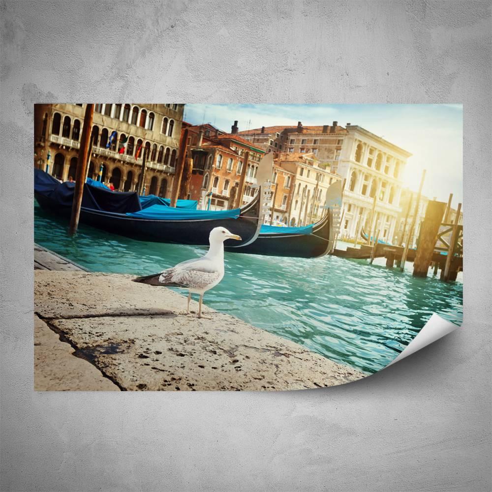 Plakát - Racek v Benátkách (60x40 cm)